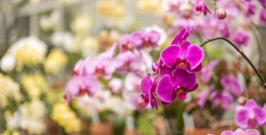Visit-LaGrange-Itinerary-orchid-plan-your-trip-hills-dales-estate