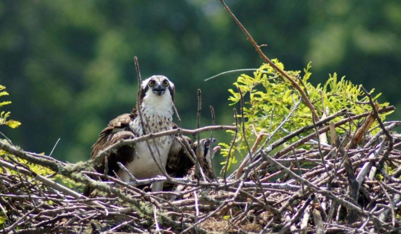 Visit-LaGrange-Osprey-West-Point-Lake